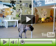 Vail Doggie on YouTube